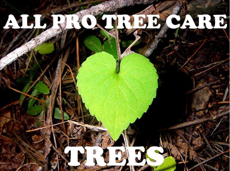 Professional-tree-service-Auburn-Federal-Way-Kent-Des-Moines-Burien-Normandy-Park-WA
