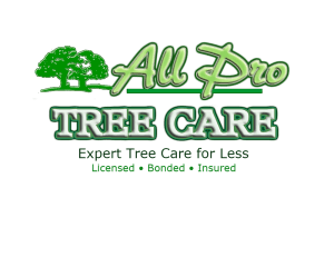 all pro tree care tree removal service