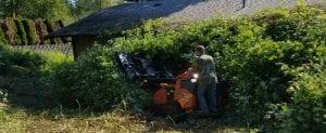 blackberry removal kent+federalway+auburn_burien+renton+tukwila+seatac+des moines wa (2)