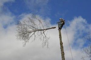 cutting trees auburn-federal way-kent wa
