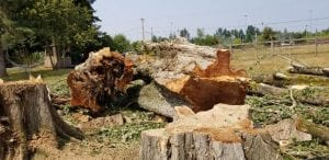 lot clearing services kent-federal way- auburn wa