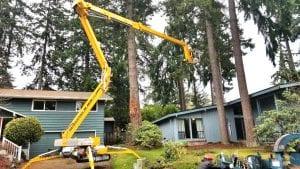 professional tree service company