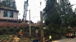tree removal service auburn wa -