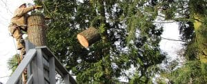 and tree removal company Auburn- Federal Way- Kent-Des Moines Wa