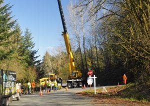 Tree Removal service -Removal of dead multi trunk maple on a hillside