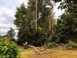 dead tree removal service kent_edgewood_federal way_milton_fife_seatac wa