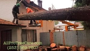 emergency tree removal service Federal Way_Kent_Auburn_Burien_Des Moines WA