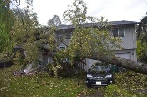 emergency tree service seatac-tukwila-renton-covington-renton-auburn-federal way-des moines wa