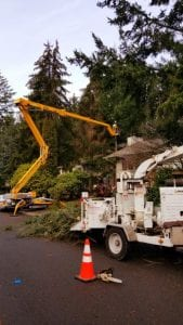 spider lift tree removal for emergency tree services auburn_seattle_kent_federal way_des moines wa