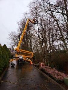tree cutting service auburn_tukwila_renton_seattle_kent_des moines wa