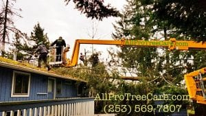 tree removal service Seattle Renton Seatac Pacific Auburn Federal Way Burien Des Moines WA