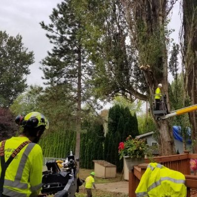 dangerous tree removal service