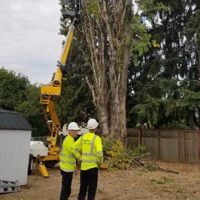 tree removal service federal way_kent_renton Wa