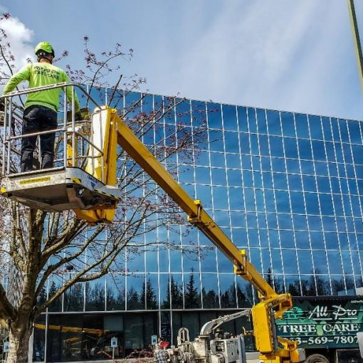 tree trimming and pruning service renton, kent, auburn wa